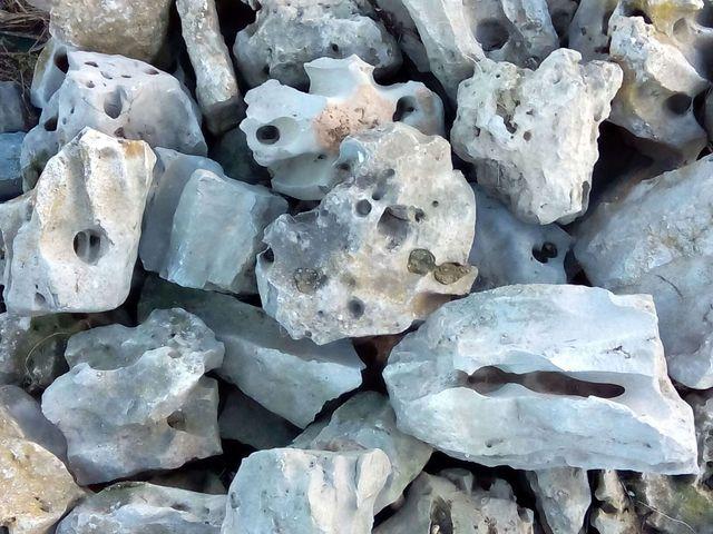 Piedras decorativas para jardin de segunda mano por 250 for Piedras decorativas jardin