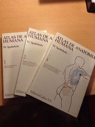 3 Libros De Anatomia W. Spalteholz.