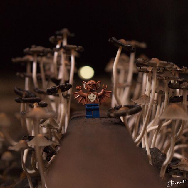 Photo Lego Batman sur toile