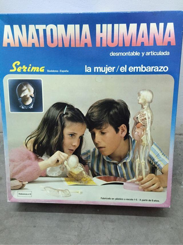 Anatomia humana mujer embarazada de segunda mano por 40 € en Camarma ...