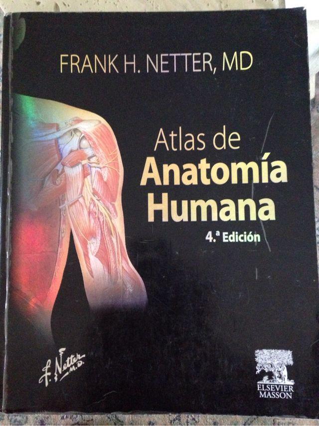 Atlas Anatomia Netter 4a Ed. de segunda mano por 50 € en Galapagar ...