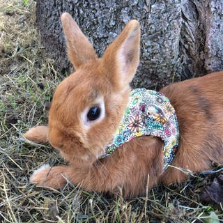 Arnés para Conejos!