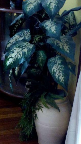 Plantas tela muy bonita, perfecto estado