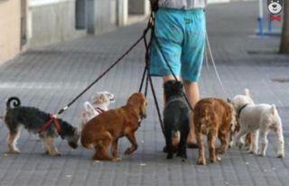 Paseamos y cuidamos animales