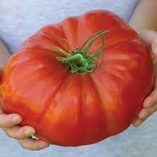 Semillas de tomate.