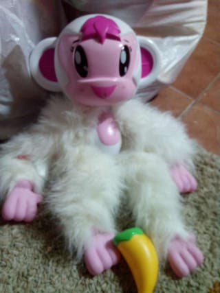 Kuky monkey