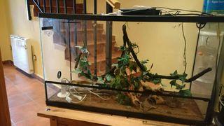 OFERTA Terrareo para reptiles