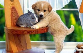 Cuido animales. Página facebook: Todo mascotas