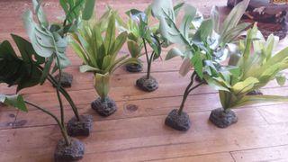 Plantas para terrario EXO TERRA