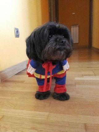 Disfraz super dog, ULTIMO PRECIO