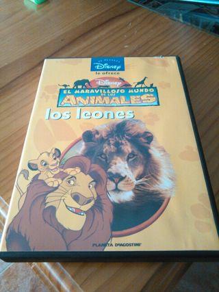 Pelicula dvd infantil Los Leones