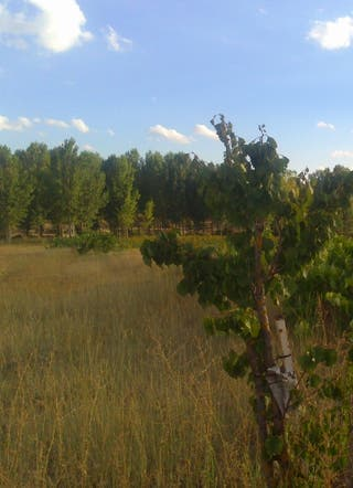 Terreno en cardenete, pueblo de cuenca.