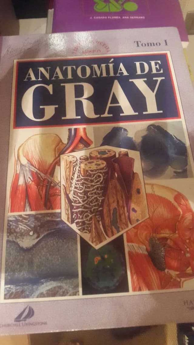 Anatomia de gray de segunda mano por 50 € en Barcelona en WALLAPOP