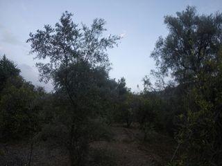 Parcela cultivo en Valle de Lecrin,Granada,España