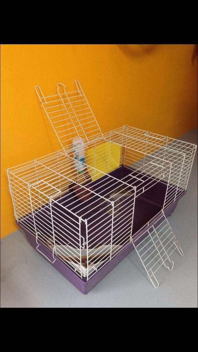 Jaula para conejos/roedores