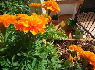 Plantas, variadas