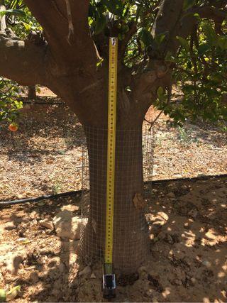 Se podan palmeras servicio de jardinero a domicilio