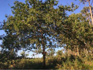 Terreno 8000 Mts O Grove en A Granxa, Siradella