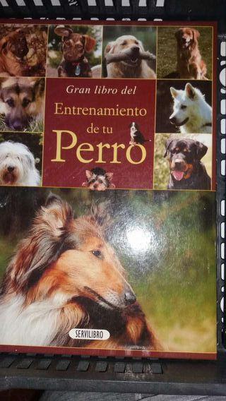 Entrenamiento de tu perro
