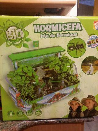 Hormicefa-Isla de Hormigas