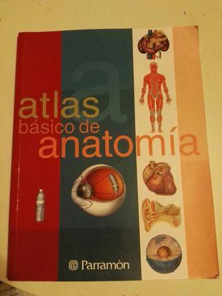 Atlas basico anatomia