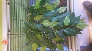 Planta para terrario