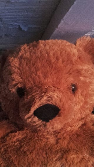 Un metro de oso