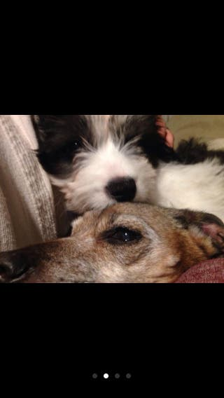 Canguro para perros