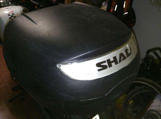 Shad 26