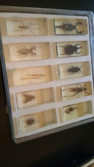 coleccion de Insectos