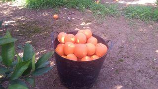 recojo fruta para particulares
