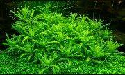 poda plantas
