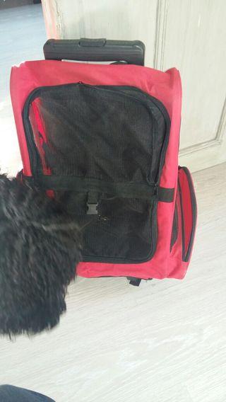 Transportin mascota