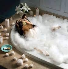 Hotel canino, baño y corte de uñas