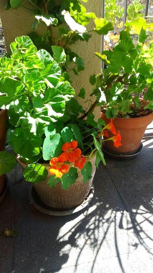 Plantas.