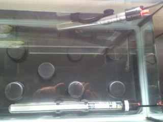 Calentador de agua para mascotas / peces / tortugas