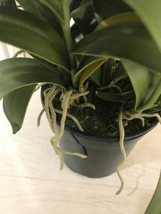 Planta Artificial Nueva