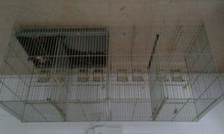 jaulas de cría 100x40cm