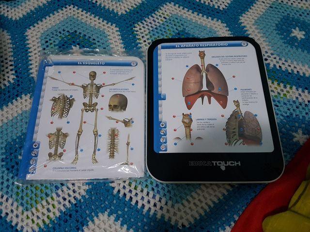 Tablet del cuerpo humano