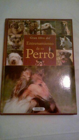 El entrenamiento de tu perro.