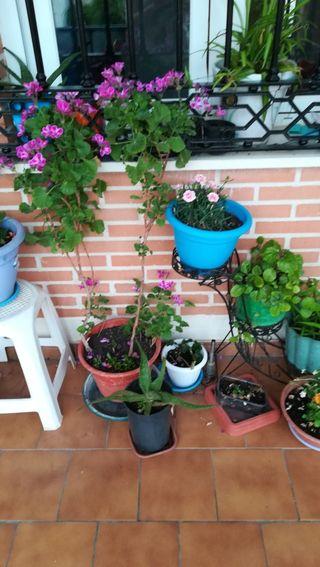 varias plantas en venta
