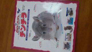 Chinchilla libro en japones