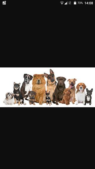 Cuido perros