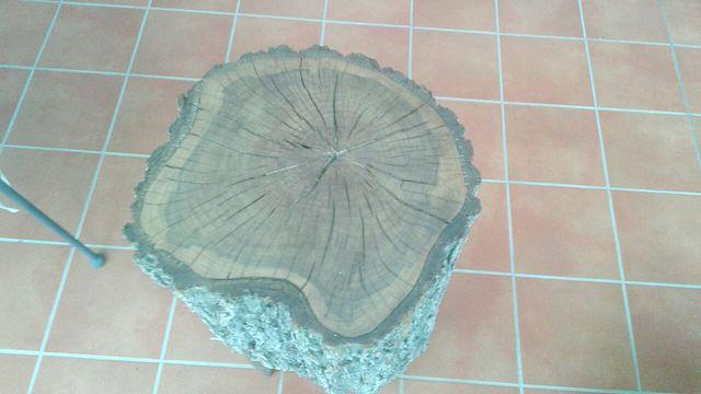 troco de madera de olmo