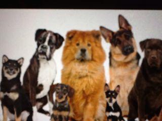 Cuidador de perro