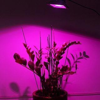 Cultivo LED
