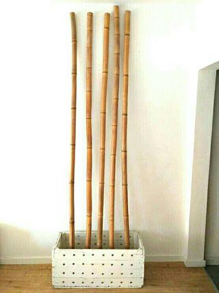 Bambú natural decorativo Zen