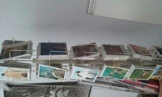 Postales de Animales