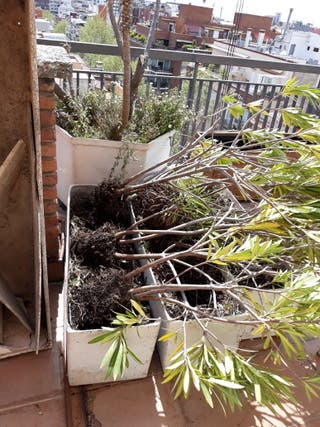 Jardinero limpieza y mantenimiento