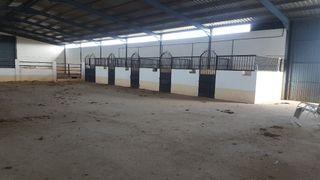 boxes para caballos